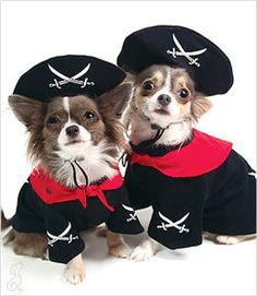 It's a Pirate's life for me in this great dog costume! I can be the Captain of Doggie Pirates in this black pullover cotton shirt with attached red bandana has skull and cross-blades graphic on back a