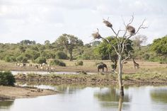 """From Krüger NP to the South African south coast – back in """"real Africa"""", a great school in Swaziland and relaxed time at the Indian Ocean - http://4-wheel-nomads.de/?p=5460 - Krüger National Park … was just wonderful! After having left Krüger National Park, suddenly we find ourselves back in """"real"""" Africa. Before we enter Swaziland, we drive through an Africa we know from Kenya or Tanzania: small villages, tiny shops and supermar"""