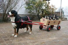 dog pulling a cart with puppies