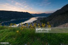 Flowers and grass on a hill above the town of Kotor. In the... #dobrota: Flowers and grass on a hill above the town of Kotor. In… #dobrota