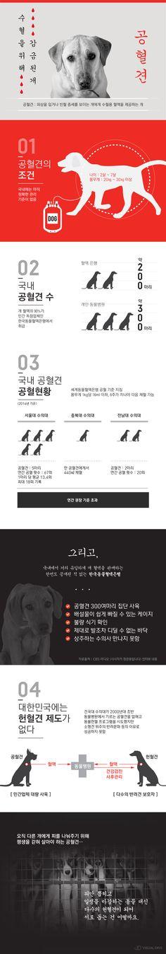 애완견을 위해 희생되는 개 '공혈견'을 아시나요? [인포그래픽] #Dog / #Infographic ⓒ 비주얼다이브 무단 복사·전재·재배포 금지