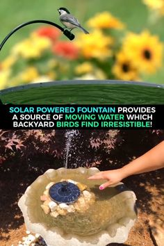 Birds are attracted to the sound of moving water. The solar powered fountain provides a source of moving water which backyard birds find irresistible! Dream Garden, Garden Art, Garden Design, Garden Fountains, Backyard Birds, Water Garden, Garden Projects, Backyard Landscaping, Gardening Tips