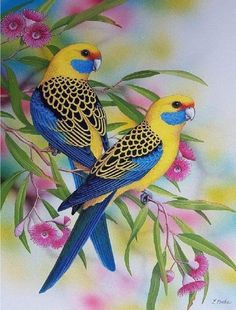 """""""Yellow Rosellas"""" by Lyn Cooke. Paintings for Sale. Bluethumb – Online Art Galle… """"Yellow Rosellas"""" by Lyn Cooke. Paintings for Sale. Cute Birds, Pretty Birds, Funny Birds, Most Beautiful Birds, Animals Beautiful, Exotic Birds, Colorful Birds, Vogel Illustration, Beautiful Nature Wallpaper"""