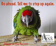 IYF Shame Aggressive Macaw Parrot