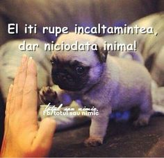 Cute Baby Pug - pug murphy the pug cute adorable obsessed baby. pug tag – pug puppy super cute baby animals for hd high definition. Cute Baby Pugs, Cute Puppies, Puppies Puppies, Adorable Dogs, Funny Animals, Baby Animals, Cute Animals, Teacup Animals, Animal Jokes