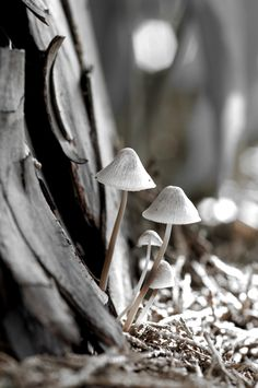 misty gray autumn mushrooms