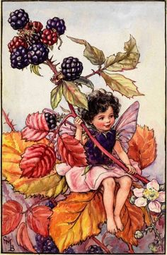 """Vintage print 'The Blackberry Fairy' by Cicely Mary Barker from """"The Book of the Flower Fairies""""; Poem and Pictures by Cicely Mary Barker, Published by Blackie & Son Limited, London [Flower Fairies - Autumn] Cicely Mary Barker, Elfen Fantasy, Fantasy Art, Autumn Fairy, Fairy Pictures, Vintage Fairies, Flower Fairies, Fantasy Illustration, Fairy Art"""