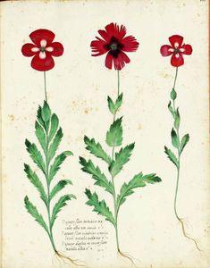 botanical flower - Google 검색
