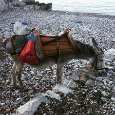 donkey Sailing Day, Donkey, Islands, Greece, Greece Country, Donkeys