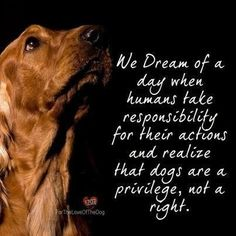 If you can't care for someone, don't bring them into your life. #responsibleowner #dogsarepeopletoo