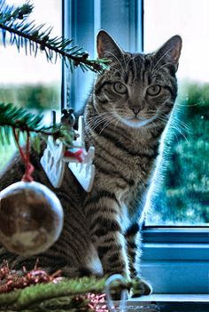 Christmas Inquistor  by =Aconitum-Napellus