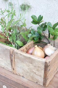 salvaged storage box for vegetables etc in kitchen