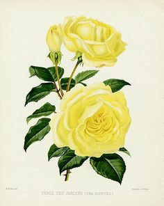 William Paul Rose Prints, The Rose Garden 1888
