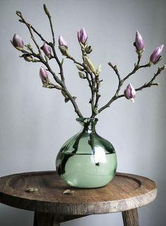 Magnolia | piet klerkx