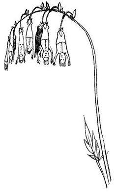 edward lear illustration | illustration | Pinterest