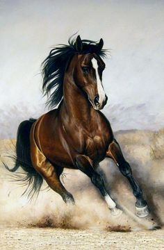 Or I dream il fancies me, though I'm jumping on a quick horse . Discussion on LiveInternet - Russian Service Online diary - Marie Grzymlas - Pferd Cute Horses, Pretty Horses, Horse Love, Beautiful Horses, Animals Beautiful, Cute Animals, Horse Pencil Drawing, Horse Drawings, Animal Drawings
