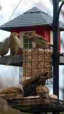 Other Bird & Wildlife Accs Rational Large Wild Bird Hanging Nut Feeder Brown Metal Yard, Garden & Outdoor Living