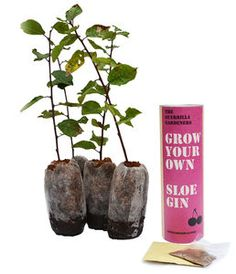 Grow Your Own Sloe Gin Kits - shop by price