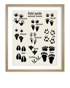 Woodland Animal Tracks Poster, Field Guide Series, Woodland Nursery