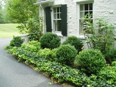 Beautiful, classic boxwood and ground cover landscaping for a colonial home.