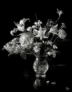 Still Life in Black and White