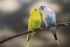 Home & Garden Apprehensive 6 Pcs Wood Bird Toy Special Design Colorful Small Medium Parrots Big Bird Chew Swing Pets Toys Bird Supplies Easy To Lubricate Bird Supplies