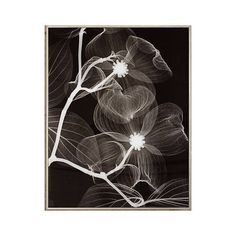 "Dogwood Blossoms Negative 25"" High Framed Wall Art ($82) ❤ liked on Polyvore featuring home, home decor, wall art, oversized wall art, framed flower wall art, vertical wall art, blossom wall art and flower wall art"