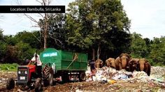 Petition · Save Wild Elephans in Sri Lanka. Stop feeding them with plastic wast! · Change.org