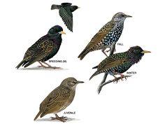 Starling's season looks