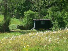 Lovely Shepherd's Hut in a meadow. I really want one in my garden! Wild Flower Meadow, Wild Flowers, Exotic Flowers, Fresh Flowers, Purple Flowers, English Shepherd, German Shepherds, Shepherds Hut, Flower Shower