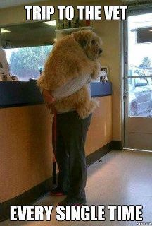 Dogs at the vet
