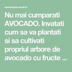 Avocado, Gardening, Interior, Medicine, Plant, Lawyer, Indoor, Lawn And Garden, Interiors
