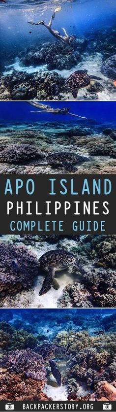complete guide to Apo Island, Philippines- Tanks that Get Around is an online st… – Turkey Bohol, Palawan, Philippines Destinations, Philippines Travel, Travel Destinations, Siargao, Cebu, Manila, Travel Guides
