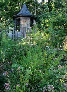 ブラックベリーを採りに の画像 森のほとりの小さな家で~