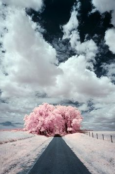 The Pink Highway of Wanderlust Land /// #travel