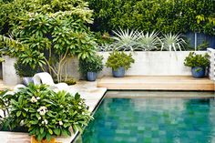 Inviting pool with large format pool tile. Lush plants in pots brought right into the space. Pinned to Pool Design by Darin Bradbury.