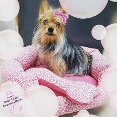 Breast Cancer Awareness month is here! 🎀 How cute does our Marley girl look on our little pink doggy bed! Breast Cancer Awareness, Custom Pillows, Dog Bed, That Look, October, Photo And Video, Cute, Fabric, Pink