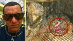 Coward slashes dog in half and takes the animal's guts out for fun! SIGN AND SHARE!