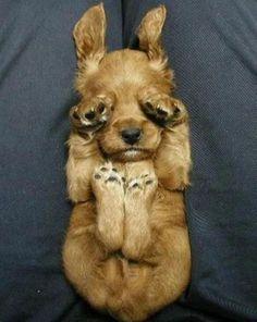 #puppies! puppies! puppies!