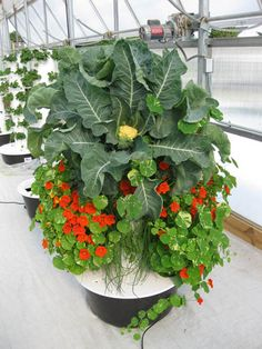 Juice Plus Vegetable Tower Almost Any Crop Can Be Grown In The Garden