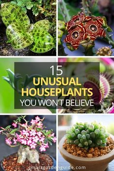 17 of the most unusual, but stunning houseplants you will ever see. I've picked my favorite unusual houseplants that provide equal amounts of intrigue and amazement. Bat Flower, Jewel Orchid, Marimo Moss Ball, Kitchen Plants, Growing Greens, Smart Garden, Dish Garden, House Plant Care, Garden Guide