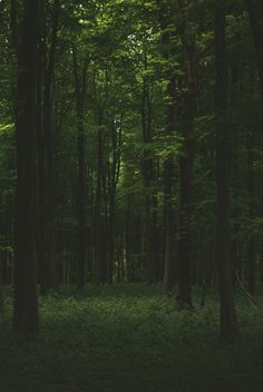 Ideas Photography Dark Forest Woods For 2019 Beautiful World, Beautiful Places, Trees Beautiful, Slytherin Aesthetic, Château Fort, Mystique, Dark Forest, Nature Quotes, Light In The Dark