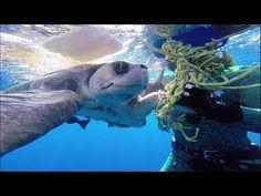 GoPro: plongeur sauve des tortues de mer