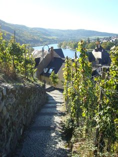 Berkastel -Kues & Mosel River Valley Holiday Lettings, Prague, Warehouse, Places Ive Been, Wine, Spaces, Holidays, Outdoor, Trier