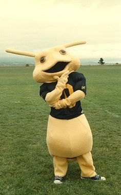 meet sammy uc santa cruz mascot what the heck is that thing