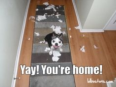 How many times did I come home to this in the puppy years? A lot!