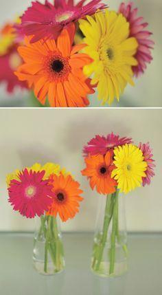 flores laranja amarelo rosa - Pesquisa do Google