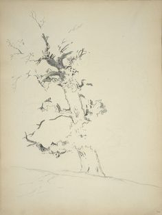 John Singer Sargent, Study Of A Tree