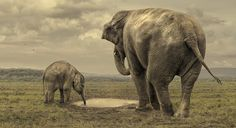 INDIAN ELEPHANT: Drink Little One by Glyn Dewis on 500px