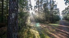 Creative Walks: Stadtwald Rodgau
